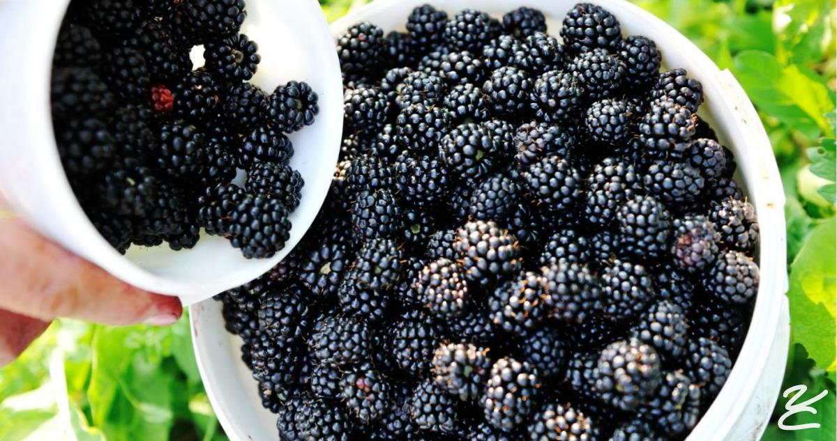 La mia confettura extra di Frutti di Bosco e Pistacchio